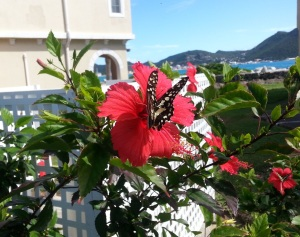 st maarten shipyard butterflies