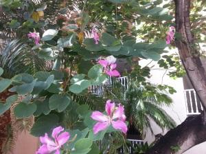 st maarten shipyard flower butterfly