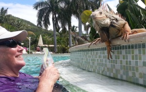 st martin final days judy iguana