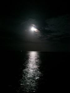 bahamas chub moon