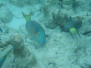 tc fish